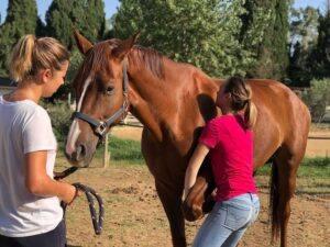 techniques ostéopathie animale